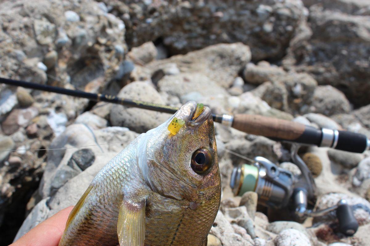 http://apsnyfishing.ru/uploads/images/2017/02/16/img_1927.jpg
