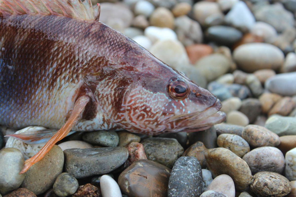 http://apsnyfishing.ru/uploads/images/2017/02/16/img_2045.jpg