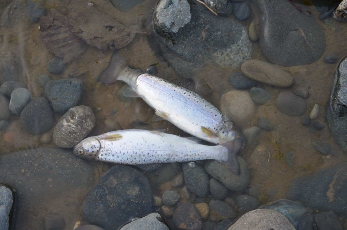http://apsnyfishing.ru/uploads/images/2017/03/16/dsc_0249.jpg