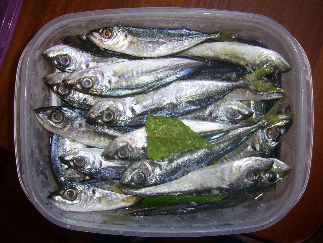 http://apsnyfishing.ru/uploads/images/2017/05/31/pic_0053.jpg