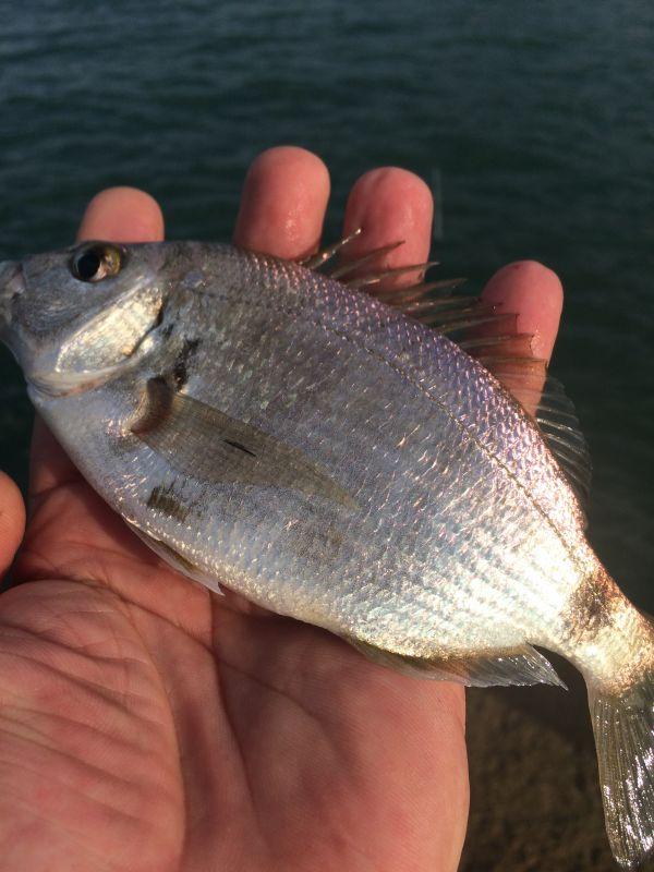 http://apsnyfishing.ru/uploads/images/2017/06/06/img_2910.jpg