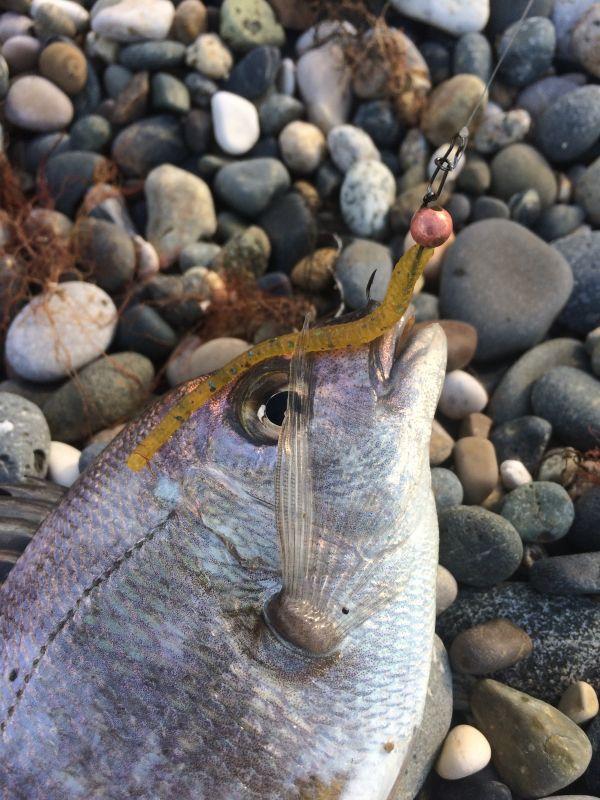 http://apsnyfishing.ru/uploads/images/2017/06/06/img_2932.jpg