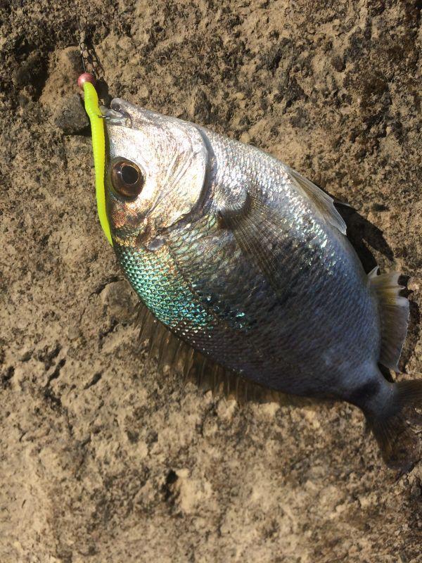 http://apsnyfishing.ru/uploads/images/2017/06/06/img_2940.jpg