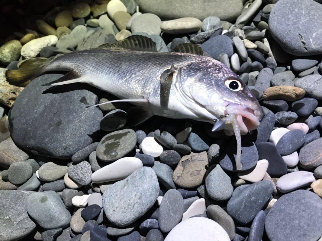 http://apsnyfishing.ru/uploads/images/2017/06/06/img_2958.jpg
