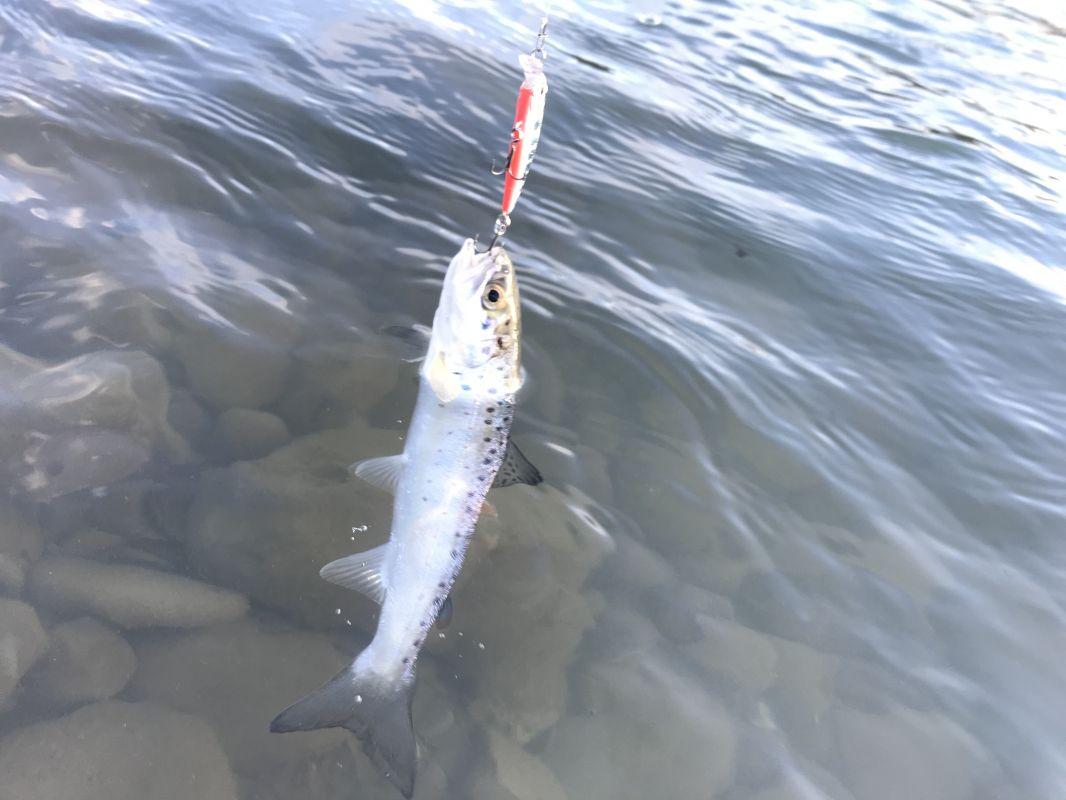 http://apsnyfishing.ru/uploads/images/2018/12/29/83704dec-5e34-4c20-bac9-2348d378be02.jpeg