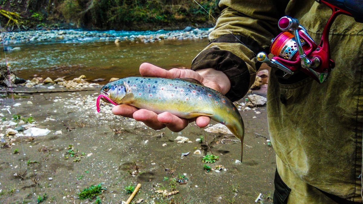 http://apsnyfishing.ru/uploads/images/2019/03/25/psx_20190325_180138.jpg